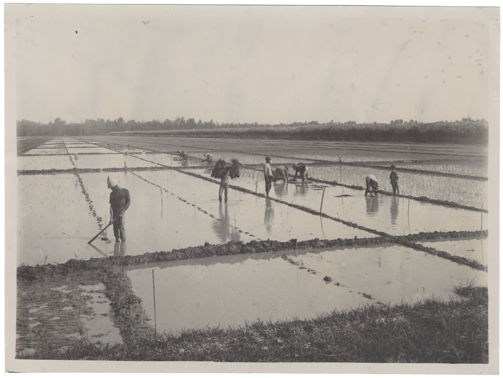 Photo taken in the Dutch East Indies, collected or made by H.P. Berlage, n.d. Collection Het Nieuwe Instituut, BERL ph324